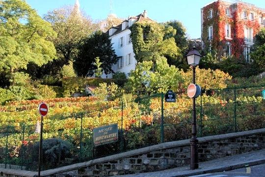 vignes-montmartre-499052